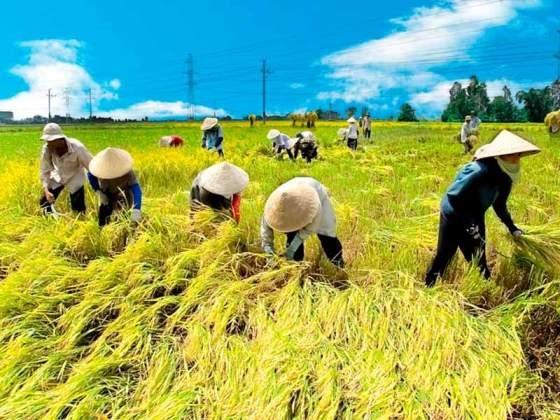 TPP genera oportunidades y retos para empresas del delta de Mekong hinh anh 1