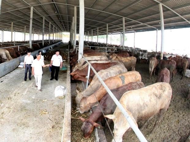 Gobierno aprueba asistencia tecnologica a zonas rurales hinh anh 1