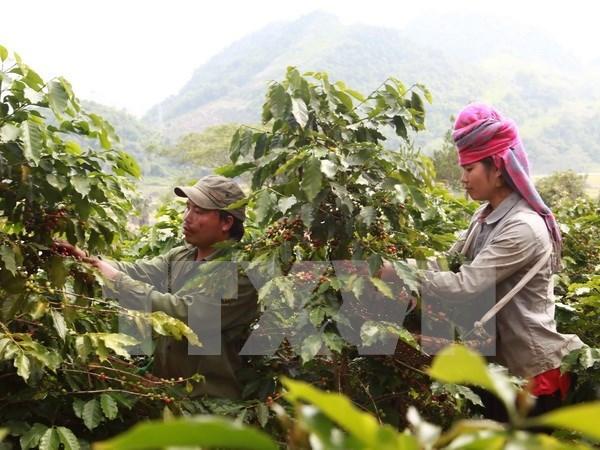 Ministro de agricultura: Ampliacion de mercado es cuestion vital hinh anh 1
