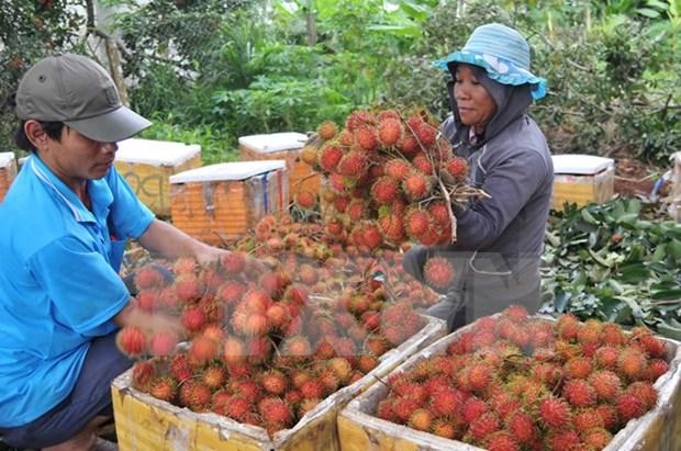 Rambutan secado de Dong Nai penetra en mercado frances hinh anh 1