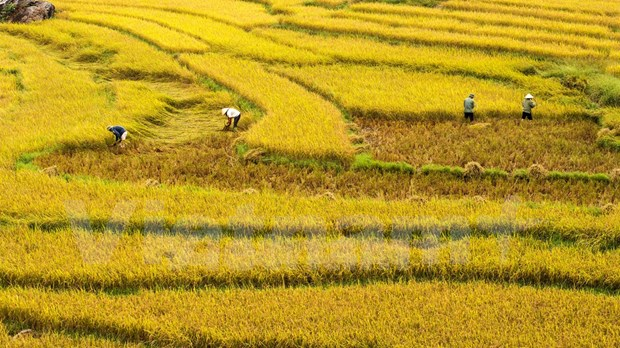 Publican primer informe anual de turismo de Vietnam hinh anh 1