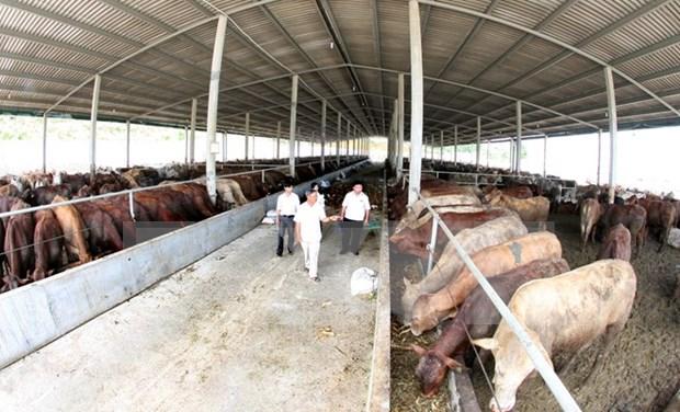 Grupo estadounidense Cargill amplia inversion en Vietnam hinh anh 1