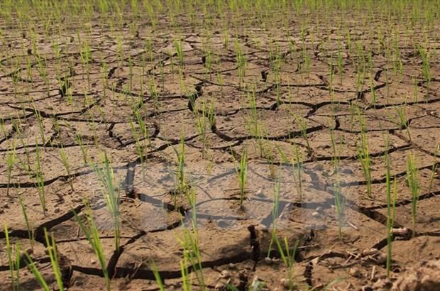 Vietnam y Alemania fomentan lazos en recursos naturales y medio ambiente hinh anh 1