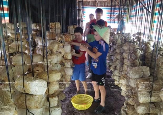 Visitantes extranjeros aprenden a ser agricultores vietnamitas hinh anh 5
