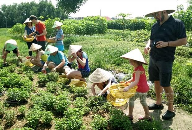 Visitantes extranjeros aprenden a ser agricultores vietnamitas hinh anh 6