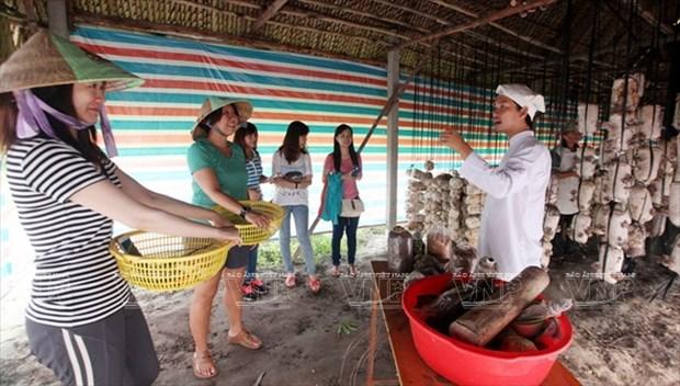 Visitantes extranjeros aprenden a ser agricultores vietnamitas hinh anh 4