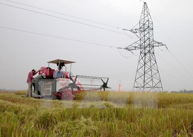 Sector de agricultura busca mayor inversion en tiempo del TPP hinh anh 1