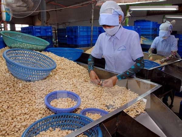 Exportaciones vietnamitas de anacardo lograran dos mil 500 millones USD hinh anh 1