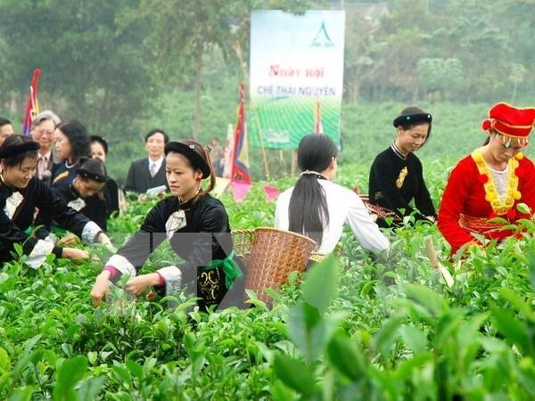 Arte del te de Vietnam armoniza con culturas de ASEAN hinh anh 2