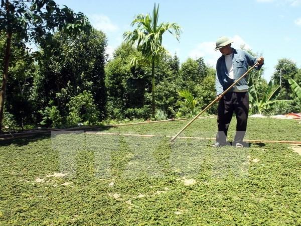 Sur y Sureste de Asia cooperan en desarrollo rural hinh anh 1