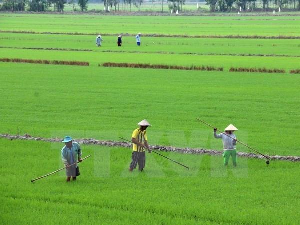 Debaten en Vietnam medidas para elevar la competitividad de productos agricolas hinh anh 1