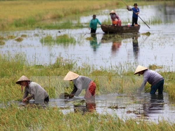 Mas de 70 por ciento de empresas en Delta Mekong danadas por cambio climatico hinh anh 1