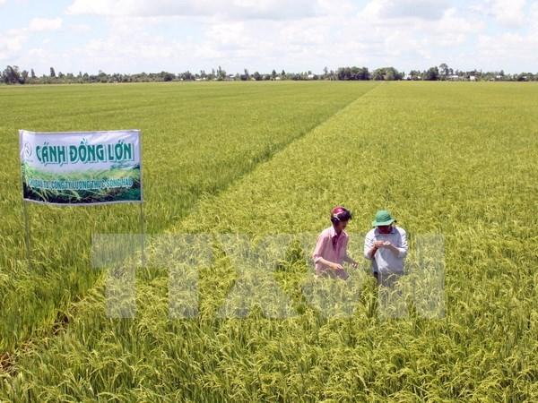 Honran en Vietnam 100 modelos de cultivo agricola hinh anh 1