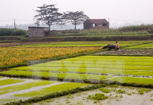 Fomentan integracion de agricultura vietnamita hinh anh 1