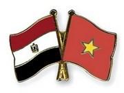 Embajador vietnamita presenta cartas credenciales al presidente egipcio hinh anh 1