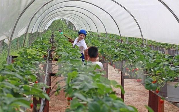 Concede Canada asistencia financiera a agricultores vietnamitas hinh anh 1