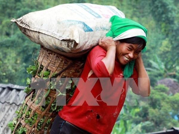 PNUD ayuda a Vietnam para eliminar discriminacion de genero hinh anh 1