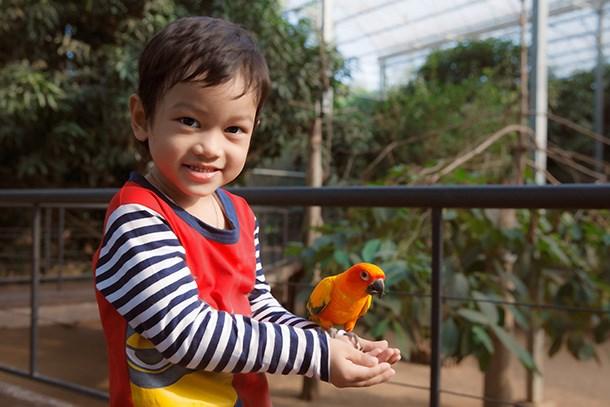 Vietnam tiene su primer parque Safari zoologico hinh anh 1