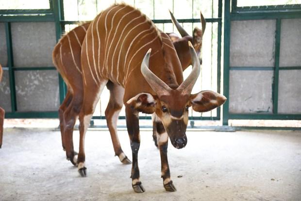 Vietnam tiene su primer parque Safari zoologico hinh anh 2