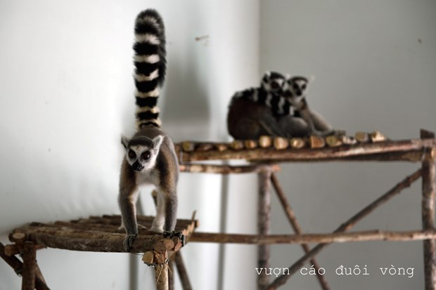Vietnam tiene su primer parque Safari zoologico hinh anh 5