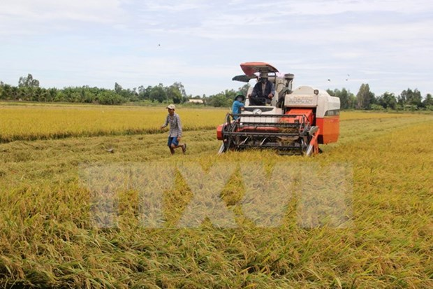Vietnam sera un gran productor agricola en Sudeste Asiatico hinh anh 1