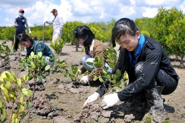 Vietnam ampliara cobertura forestal en 2016 hinh anh 1