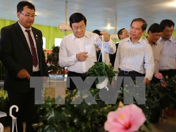 Presidente aplaude esfuerzos de provincia de Lam Dong en desarrollo agricola hinh anh 1