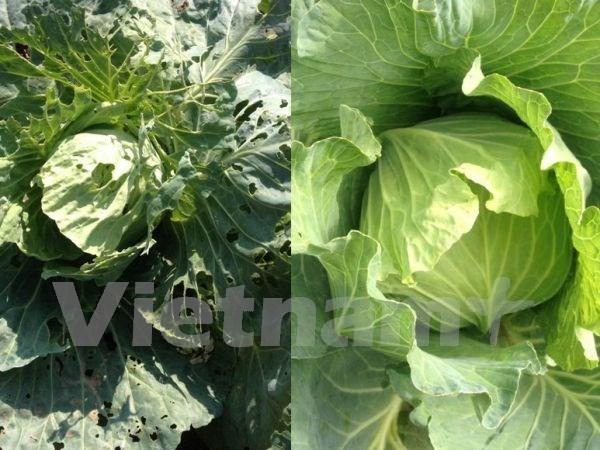 Exportacion de vegetales y frutas vietnamitas alcanza fuerte crecimiento hinh anh 1