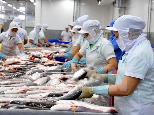 Valor de exportaciones de pescado Tra preve caer cinco por ciento en 2016 hinh anh 1