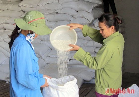 Entregan miles toneladas de arroz a pobres en ocasion del Tet hinh anh 1