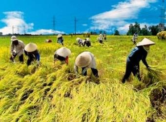 Vietnam abre concurso para buscar nuevos modelos de cooperativas hinh anh 1