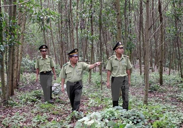 Dedica Vietnam un millon de dolares a gestion forestal sostenible hinh anh 1