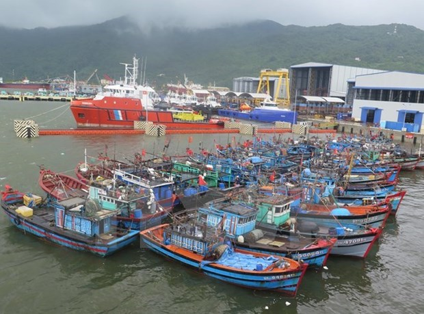 Provincia central de Quang Ngai establece reserva marina hinh anh 1