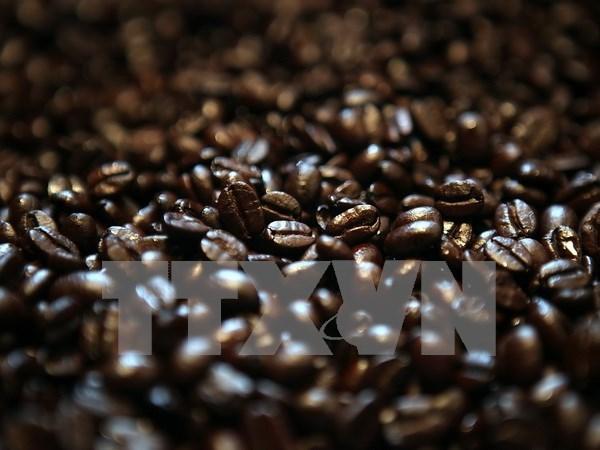 Exportacion de cafe de Laos sigue en tendencia bajista hinh anh 1