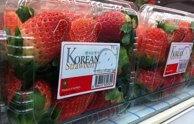 Vietnam importara fresas sudcoreanas hinh anh 1