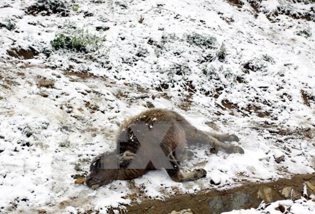 Ola de frio causa danos en la region norte de Vietnam hinh anh 1