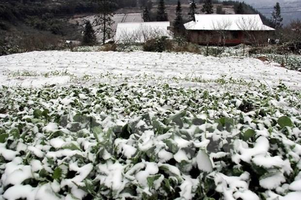 Vicepremier urge respaldar a pobladores afectados por fuerte frio hinh anh 1