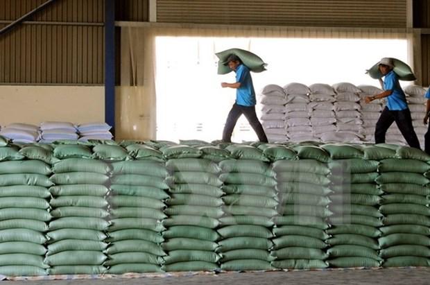 Fuerte aumento de ventas arroceras de Vietnam en enero hinh anh 1
