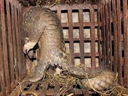 Vietnam y Reino Unido cooperan contra el trafico de animales y plantas salvajes hinh anh 1