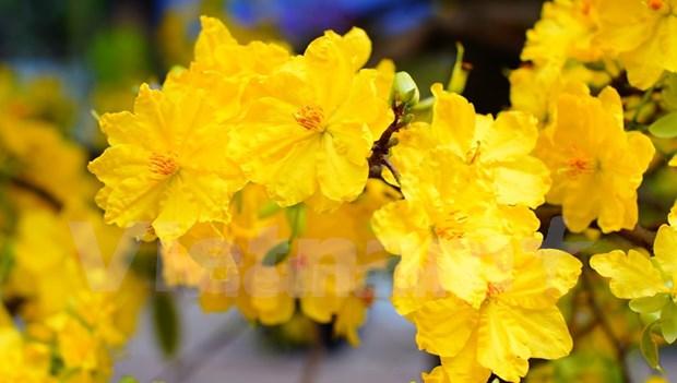 Efectuan Festival de Flores en Ciudad Ho Chi Minh hinh anh 2