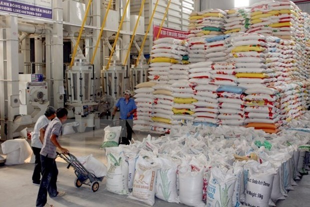 Optimistas senales para exportaciones de arroz vietnamita en 2016 hinh anh 1