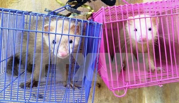Vietnam suspende comercio de especimenes de especies con Laos hinh anh 1