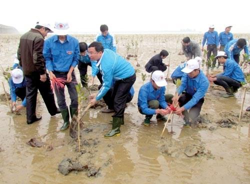 Respuesta activa de jovenes vietnamitas a la proteccion ambiental hinh anh 1