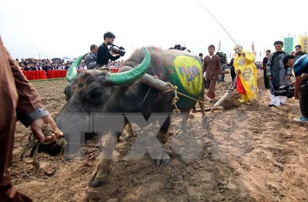 Fiestas primaverales en el Norte de Vietnam hinh anh 3