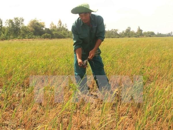 Vietnam, en lucha por mitigar afectaciones por salinizacion hinh anh 1