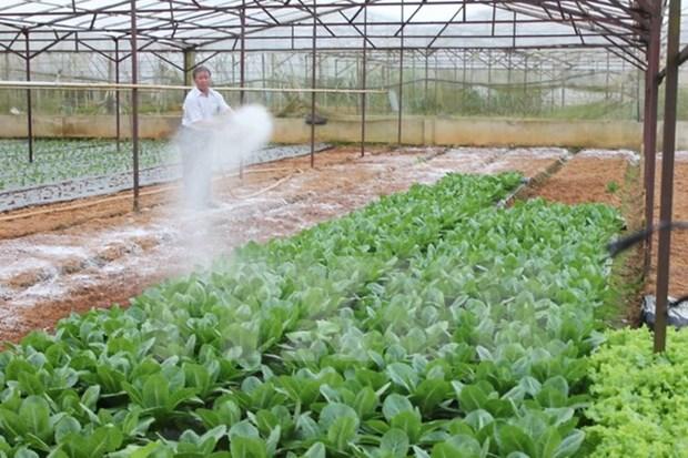 Japon ayuda al desarrollo rural en provincia nortena vietnamita hinh anh 1