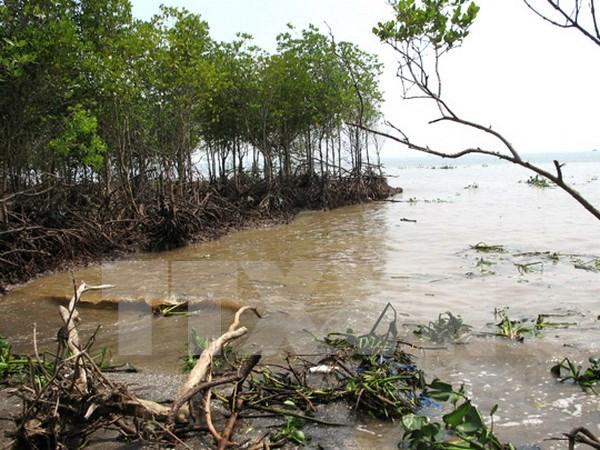 Inversion millonaria para enfrentar erosion del mar en Binh Thuan hinh anh 1