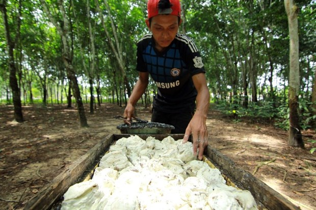 Ligera reduccion de produccion de caucho de Indonesia hinh anh 1