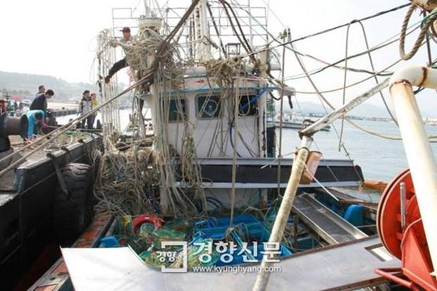 Sudcorea: Hallan cadaver de un marino vietnamita desparecido hinh anh 1
