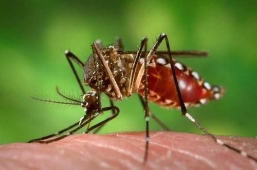 Intensifica Vietnam concienciacion a poblacion sobre lucha contra Zika hinh anh 1
